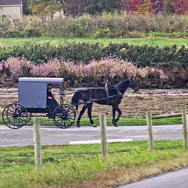 Susan Maxwell Schmidt - Amish in Chester County