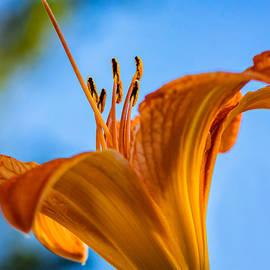 Steve Harrington - Among the Day Lilies
