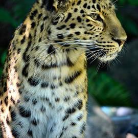 Deb Halloran - Amur Leopard