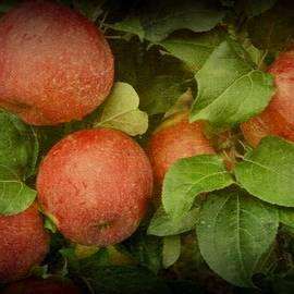 Toni Abdnour - An Apple A Day