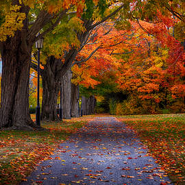 Tricia Marchlik - An Autumn Walk