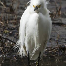 Bruce Frye - An Egret in a Lagoon