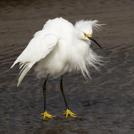 Bruce Frye - An Egret on a Stormy Day