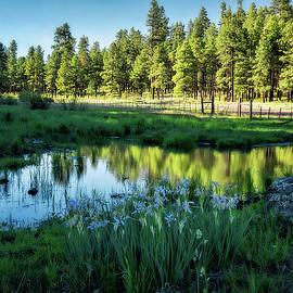 Saija Lehtonen - An Escape to the Cool Pines