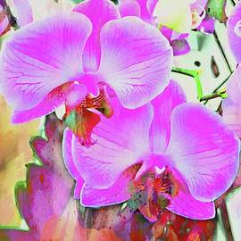 Dorothy Berry-Lound - An Exploration of Orchids