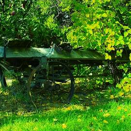 Jeff  Swan - An old wagon