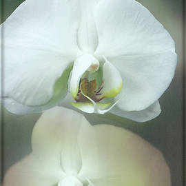 Debbie Nobile - An Orchid for You