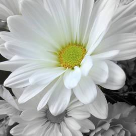 Susan Lafleur - An Outstanding Daisy