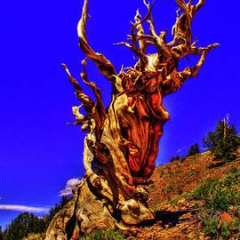 Roger Passman - Ancient Bristlecone Pine