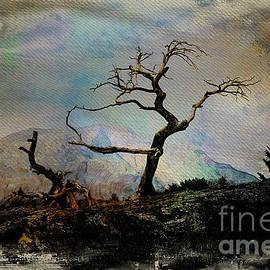 Vickie Emms - Ancient Limber Pine