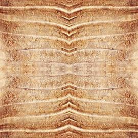 Sarah Loft - Ancient Lines 5