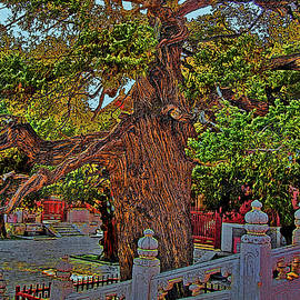 Andy Za - Ancient tree. Confucian Temple.