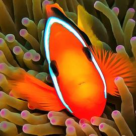 Sergey Lukashin - Anemone Fish