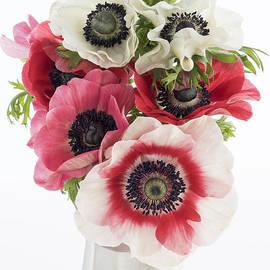 Ann Garrett - Anemones in a White Vase
