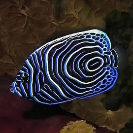 Sergey Lukashin - Angel Fish