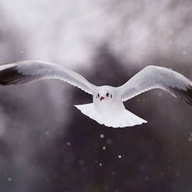 Roeselien Raimond - Angel - Gull in the Sky