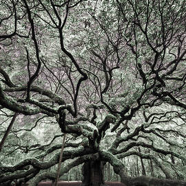 Angel Oak in Infrared - Rick Berk