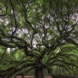 Angel Oak Tree, Charleston, SC - Rick Berk