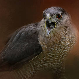 Jai Johnson - Angry Sharp Shinned Hawk