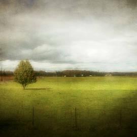 Cynthia Lassiter - Angustown Pasture