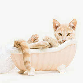 Andrea Borden - Animal Rescue Portraits- Buddy in the Bath