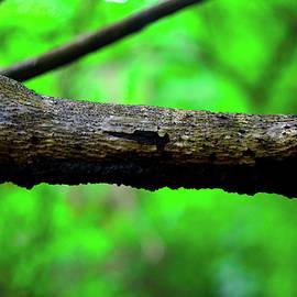 Mint Decor - Ant Nest