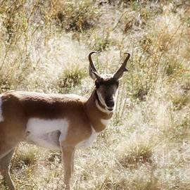 Janie Johnson - Antelope On The Range