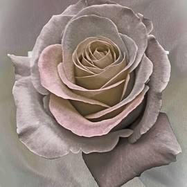 Brenda Spittle - Antique Rose