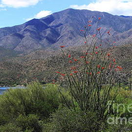 Natalie Ortiz - Apache Lake, Arizona