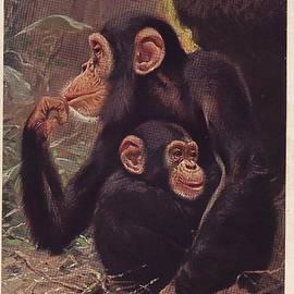 Vladimir Berrio Lemm - Apes