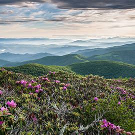 Mark VanDyke - Appalachian Trail Roan Highlands Catawba Rhododendron