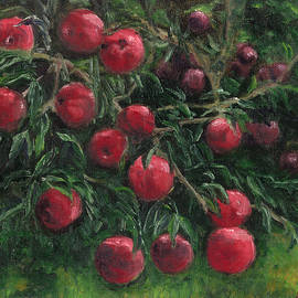 Aline Lotter - Apples Ready to  Pick