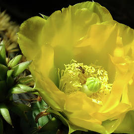 Bill Morgenstern - April Cactus Flower