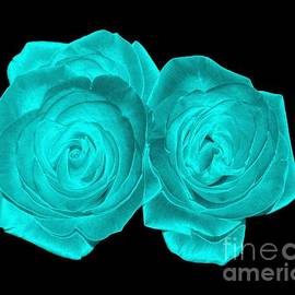 Rose Santuci-Sofranko - Aqua Turquoise Colored Roses with Underwater Effect
