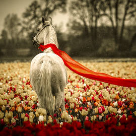 Wes and Dotty Weber - Arabian In A Tulip Field D4460