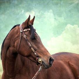 Karen Slagle - Arabian Mare with Headstall