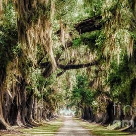 Kathleen K Parker - Arch of Oaks - Evergreen Plantation