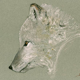 Arctic fox head - Juan  Bosco