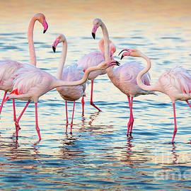 Inge Johnsson - Arguing Flamingos