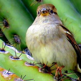 Selma Glunn - Arizona Bird