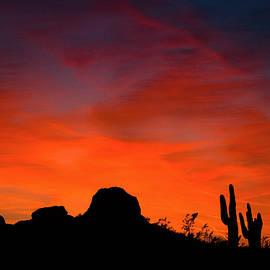 Janet Ballard - Arizona Saguaro Sunset