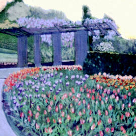 Around the Tulips to the Pergola