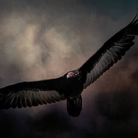 Jai Johnson - Arrival of the Vulture