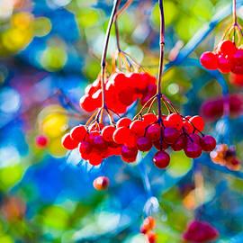 Alexander Senin - Arrowwood Berries Abstract