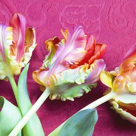Daphne Sampson - Artist Pink French Tulips