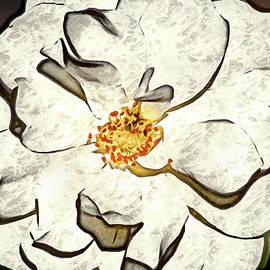 Don Johnson - Artistic Beautiful White Rose
