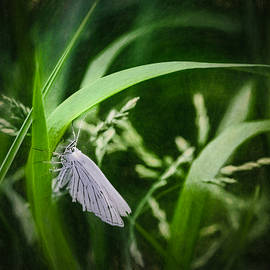 Leif Sohlman - Artistic  Black-veined Moth