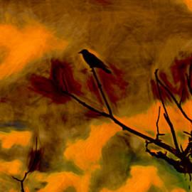 Leif Sohlman - artistic Crow Sky red