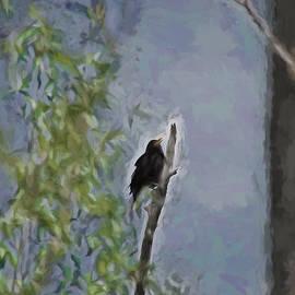 Leif Sohlman - Artistic Euroasian Blackbird June 2