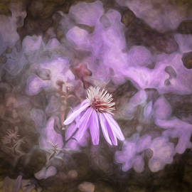 Leif Sohlman - artistic painterly Asters blooming